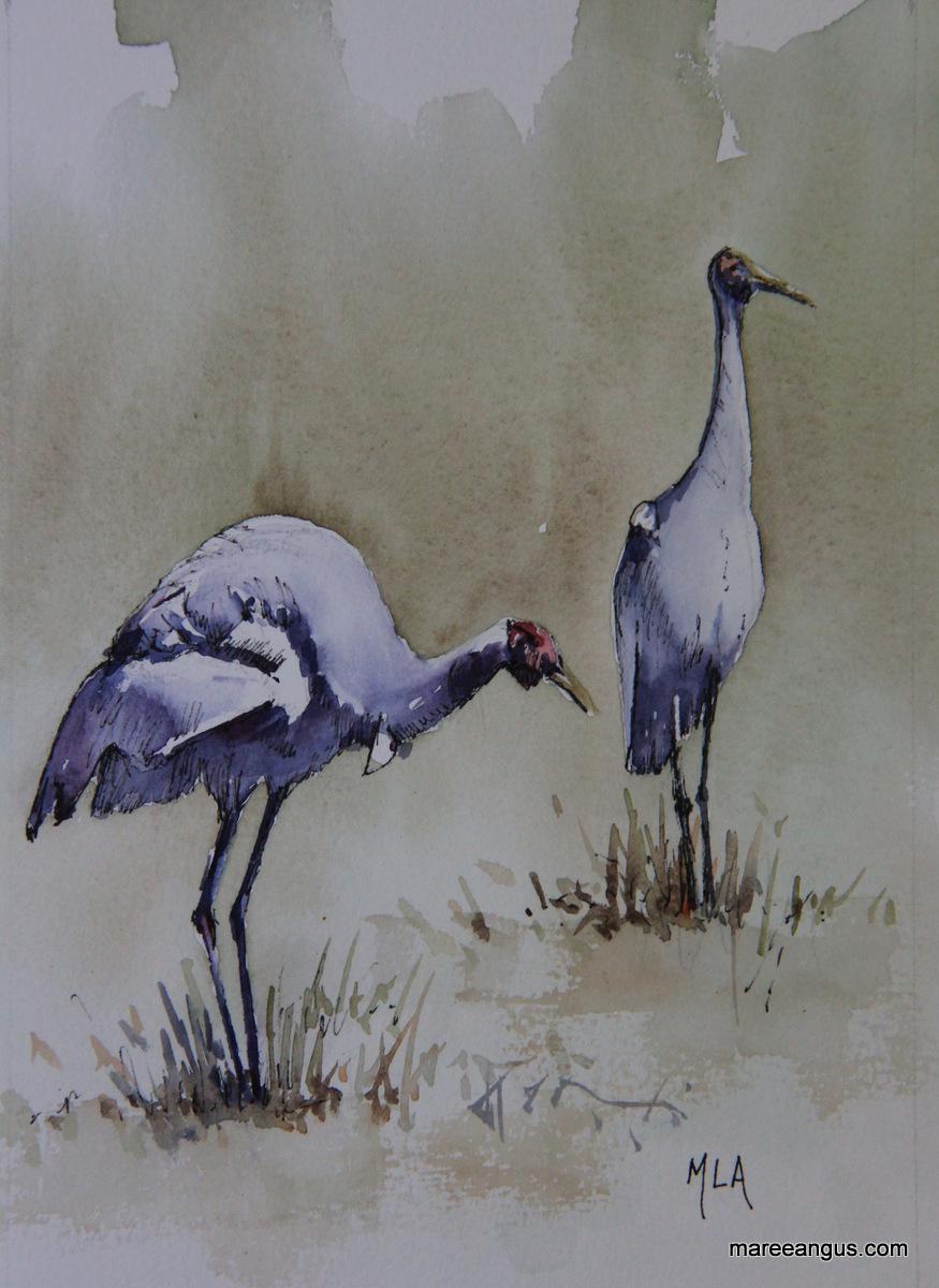 Native Companions - 23cm x 15cm, Watercolour - SOLD