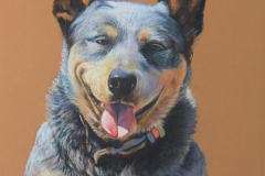 Bluebell - 45cm x 32cm, Pastel - Commission