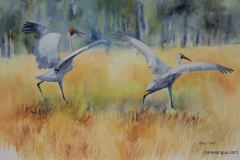 Dance of the Brolga II - 36cm x 55cm, Watercolour - SOLD