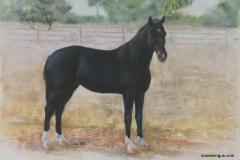 Kaptain - 45cm x 65cm, Pastel - $1660