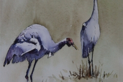 Native Companions - 23cm x 15cm, Watercolour - SOLD
