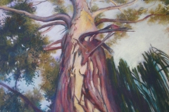 Reach for the Sky, 64cm x 44cm Pastel, - $1350(framed)