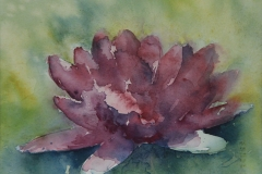 Waterlily-Dark-Pink-Watercolour